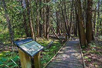Hayes Lake State Park - An interpretive sign along the Bog Boardwalk at Hayes Lake State Park in Minnesota.