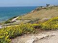 Herzliya, Israel - panoramio (2).jpg