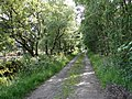 High Moor of Killiemore Lane - geograph.org.uk - 862436.jpg