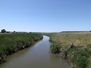 Condamine River - Hodgson Creek at Felton, 2014