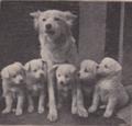 Hond100jaar.png