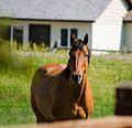 Horse - Bozeman - 2013-07-02 (9245073358).jpg