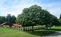 Horse stable, LFS Kirchberg am Walde.jpg