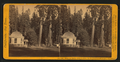 House on Stump, 36 feet in diam., the Sentinels backgorund - Calaveras Co, by John P. Soule 2.png