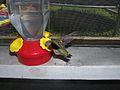 Hummingbird-Feeder-Transparent.jpg