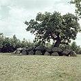 Hunebed in Rolde (Drenthe) - Nationaal Archief - 255-9894.jpg