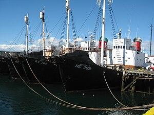 Whaling in Iceland - Icelandic whaling vessels in Reykjavík harbour