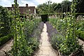 Ightham Mote gardens - geograph.org.uk - 1595629.jpg