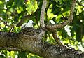 Ile Aride - Oiseau (20).JPG