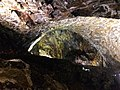 Ilha da Terceira (39038925764).jpg