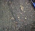 Impact breccia (Sandcherry Member, Onaping Formation, Paleoproterozoic, 1.85 Ga; High Falls roadcut, Sudbury Impact Structure, Ontario, Canada) 6 (32815764267).jpg