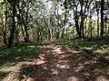 In deep forest.jpg
