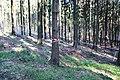 In diesem Wald liegt die Entdeckung eines römisch-germanischen Schlachtfeldes aus dem 3. Jahrhundert nach Christus - panoramio.jpg