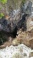 Inghiottitoio. Monte Doglia. Alghero.jpg