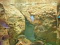 Istanbul Aquarium 56.jpg