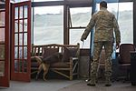 JBER military working dog teams hone their capabilities during annual certification 161014-F-YH552-019.jpg