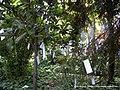 Jardín Botánico (5107127136).jpg