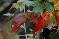 Jardin Japonais, Toulouse (8103213046).jpg