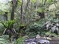 Jingualiao Creek 金瓜寮溪 - panoramio (2).jpg
