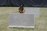K-9 training 150319-F-OH119-844.jpg