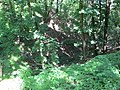 Kaniv Nature Reserve (May 2018) 83.jpg