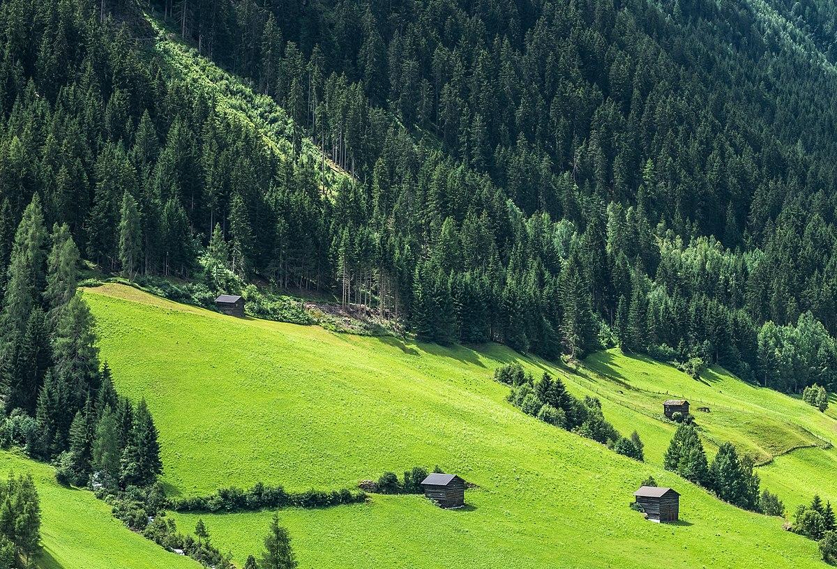 Alm (Bergweide) – Wikipedia