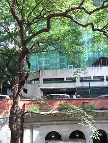 King's College garden green 1 無花果 Fig Tree Bonham Road HK May-2012.JPG