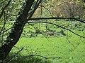 Klitoria 250 07, Greece - panoramio.jpg