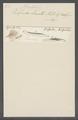 Kolpoda lamella - - Print - Iconographia Zoologica - Special Collections University of Amsterdam - UBAINV0274 113 11 0009.tif