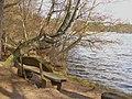 Krossinsee - Seeblick (Krossin Lake - Waterside Viewpoint) - geo.hlipp.de - 34918.jpg