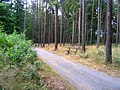 Kunratický Forest North 2, Prague.jpg