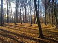 Kunratický les.jpg