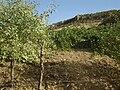 Kurdistan Sulaymaniyah province 114.JPG