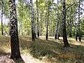 Kursk region. - panoramio (2).jpg