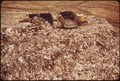 LANDFILL AT FRESH KILLS, STATEN ISLAND (JUST OPPOSITE CARTERET NJ.) - NARA - 548322.tif