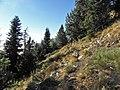 La Soucarrade - panoramio (2).jpg