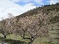 La colonia Fornes Granada - panoramio.jpg