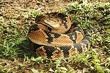 List of snake genera