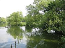 Lake surrounded by trees in Billericay