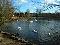 Lake in Hillfield Park - geograph.org.uk - 717576.jpg