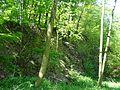Landschaftsschutzgebiet Gestorfer Lößhügel - Steinbruch (13).JPG