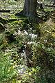 Landschaftsschutzgebiet Hoppecke-Diemel-Bergland-Typ A - Kleiner Wildbach (1).jpg