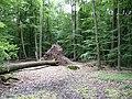 Landschaftsschutzgebiet Pferdebruch Eickholt Melle -Umgestürzter Baum- Datei 2.jpg