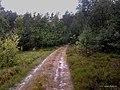 Las mieszany - panoramio.jpg