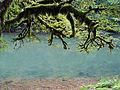 Le Doubs Baum.JPG