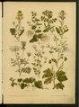"""Leclerc Du Sablon, Mathieu (1859-1944), """"Nos fleurs , plantes utiles et nuisibles"""".pdf"""