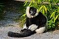 Lemur (23647847858).jpg