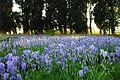Les Iris du Pavillon.jpg