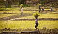 Liberia, Africa - panoramio (103).jpg