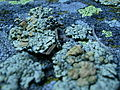 Lichen on rocks at Mica Bay 2.JPG